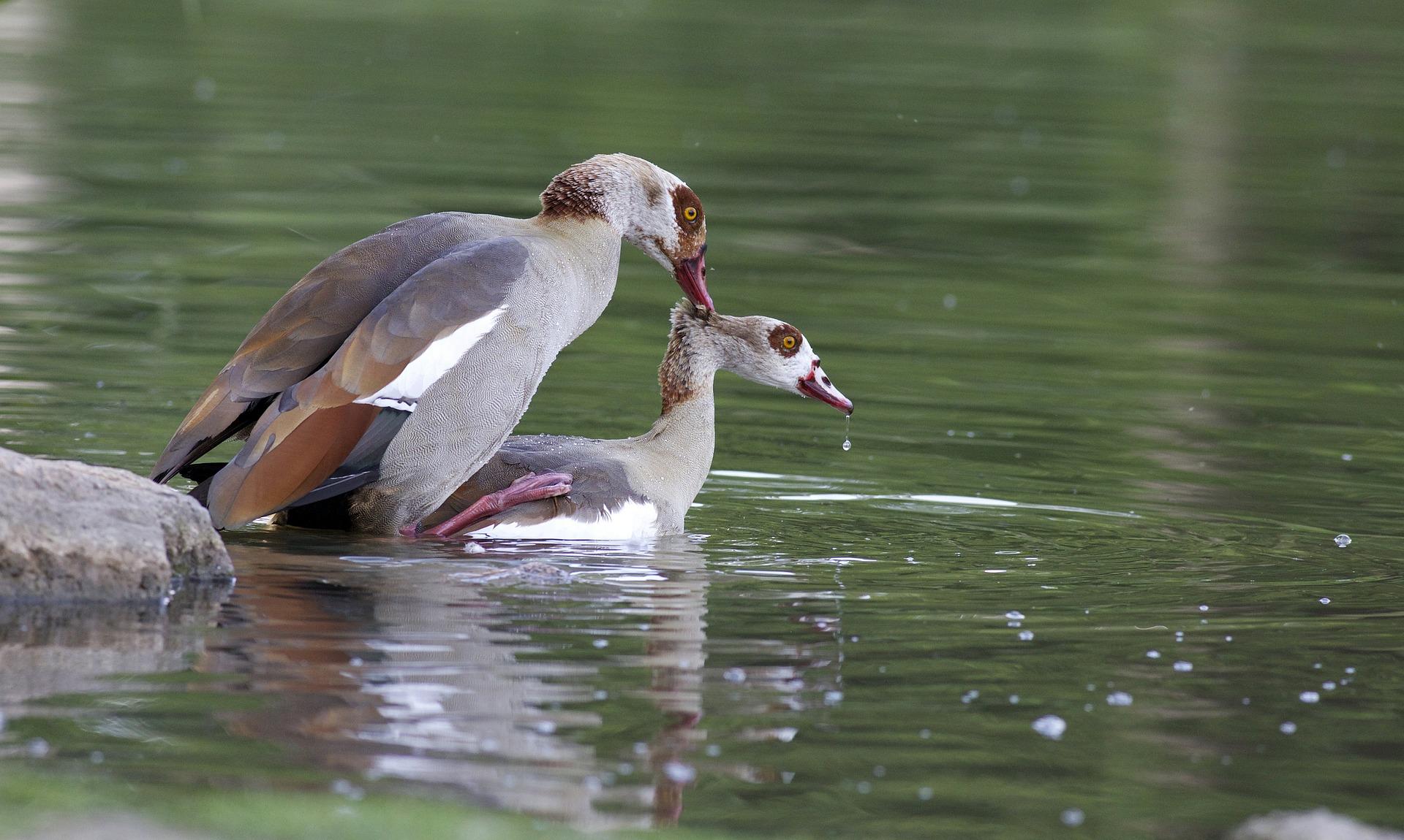 Птицы в озере